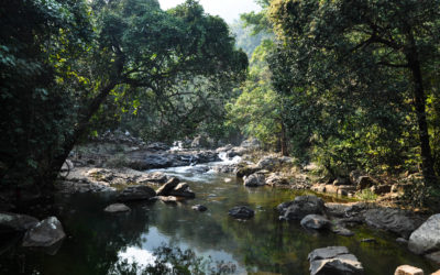 Kuldiha Forest – A Weekend Destination in Orissa