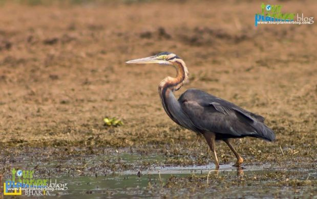 Purbasthali is a small town just 120 kms from Kolkata, located in the district of Bardhaman, between Katwa and Nabadwip. It is situated on the banks of a beautiful oxbow lake that is created by the River Ganga. This lake is 2 to 3 km long and attracts lots of migratory birds during the winter season. Bird-watchers will surely have a gala time here. The whole place of Purbosthali (also known as chupir chor) is generally covered by fruits and flower garden as well as vegetation. Although, the place does not have enough infrastructure for tourism but it is littered with many Zamindar palaces. Places to see at Purbasthali: There is a small oxbow lake by the side of the Ganga and is known for its clear water and heavy growth of sweet water plants. This lake attracts a lot of migratory birds during the winter months and becomes a favorite place for bird watchers. Besides, there are some fruit and flower gardens to check out for. How to reach Purbasthali: Purbasthali is located towards the north of Kolkata and you need travel till Krishnangar. From there, you have to cross the Chaitanya Bridge over the Hooghli River to reach Nabadwip. Follow the same road that will take you to Purbasthali Bazar and a right turn from the railway station will take you behind the station from where, after a drive for sometime, you will reach the place where boats are available. You can also visit Purbasthali by taking a direct train from Howrah heading towards Katwa. It would take around 2.5 hours to reach Purbasthali Station. Catch a rickshaw from the station to reach the Chupir Chor area.