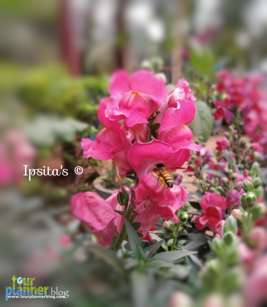 Flower in Jhargram