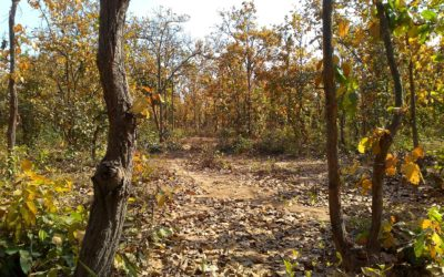 Bhalkimachan – A Refreshing Weekend Getaway with Jungle and Lonely Nature