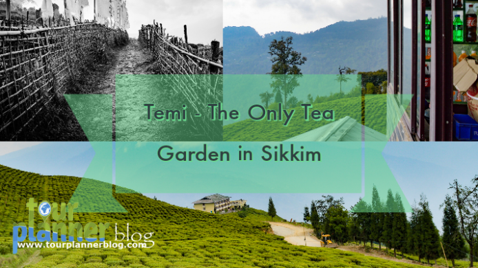 Is Temi, the only tea garden of Sikkim, your next weekend destination?