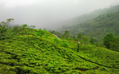 Turzum – A heaven inside tea garden