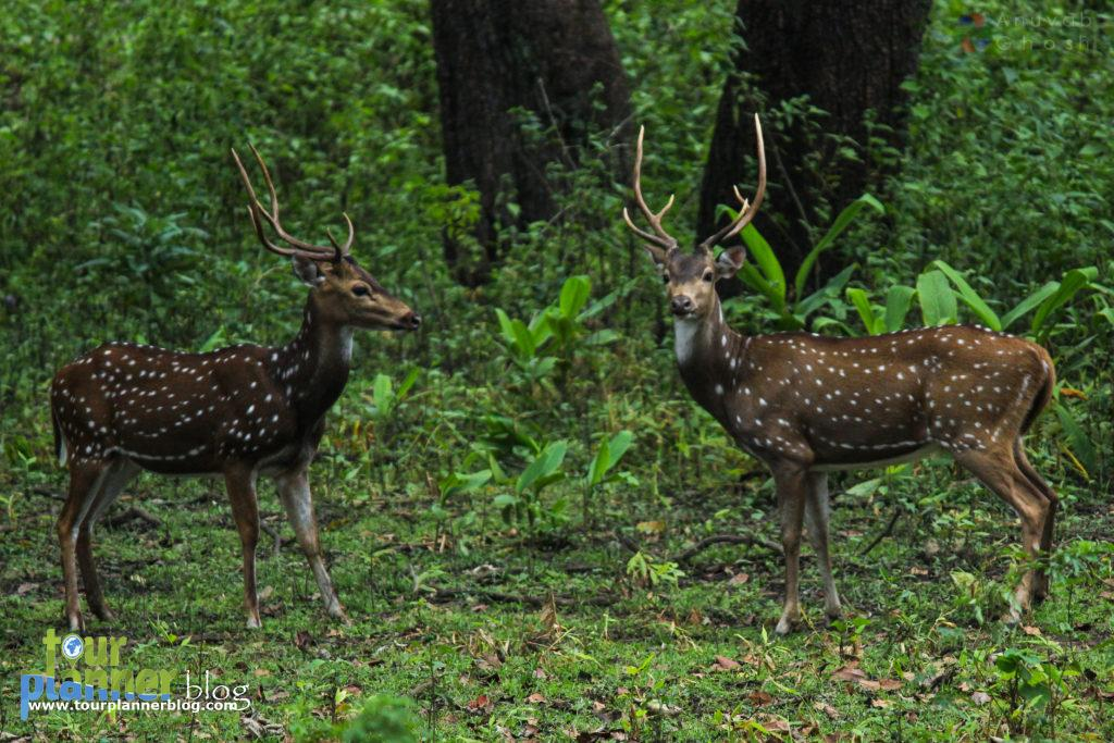 Nagarhole National Park, Coorg